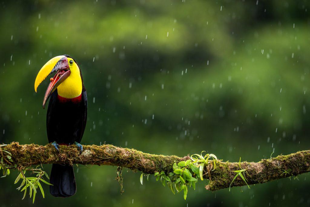 Estación lluviosa Costa Rica